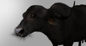 buffalo cow fur 3D model