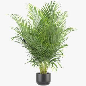 3D model areca palm