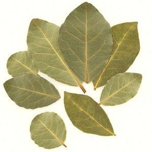 bay leaf 3D