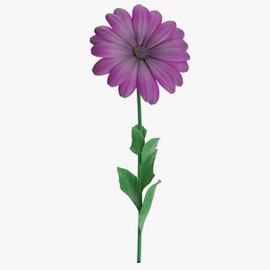 osteospermum african daisy purple 3D
