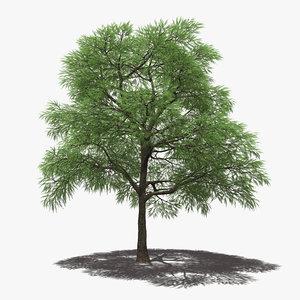 3D model prosopis tree algarrobo