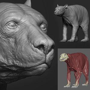 bear skeleton muscles 3D model