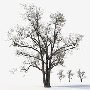 3D old poplars trees