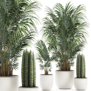 3D decorative palm white model