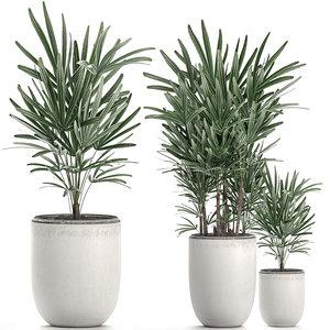 decorative palm white pots 3D