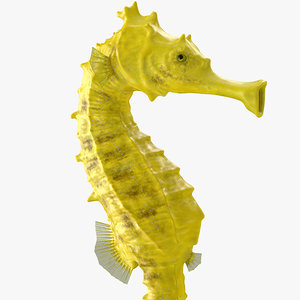 slender seahorse hippocampus reidi model