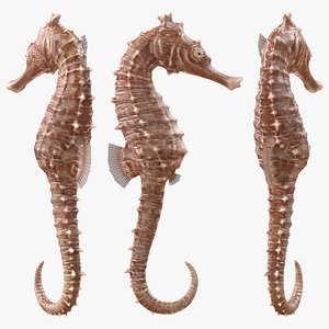 spotted seahorse hippocampus kuda model