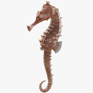 3D spotted seahorse hippocampus kuda