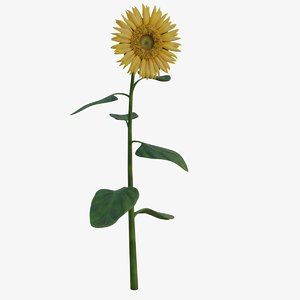 3D sunflower helianthus pbr