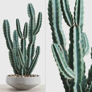 cereus peruvianus concrete pot 3D model