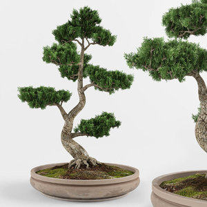 bonsai decorative tree 3D model
