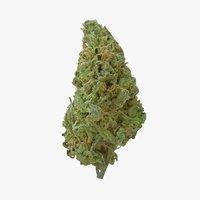 Cannabis Bud Stardawg