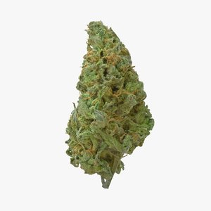 cannabis bud stardawg model