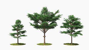 3D tree wind animation