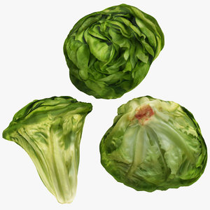 3D vegetable lettuce food
