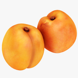 apricot ready 3D model