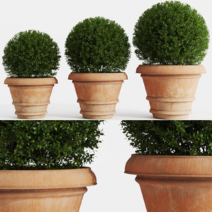 boxwood clay pots bushes 3D