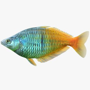 3D model boesemani rainbowfish