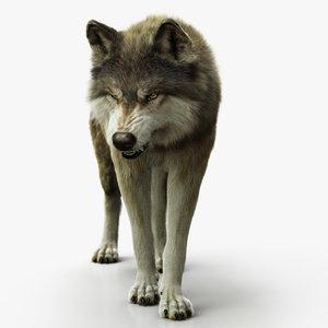 3D model wolf xgen rigged