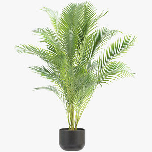 3D areca palm model