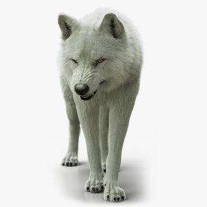 arctic wolf xgen rigged 3D model