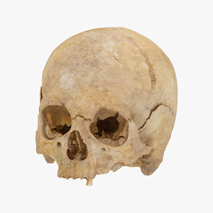 broken human skull carnial model
