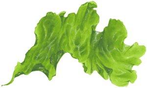 3D seaweed seabedtrip model