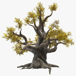 old twisted oak tree 3D model