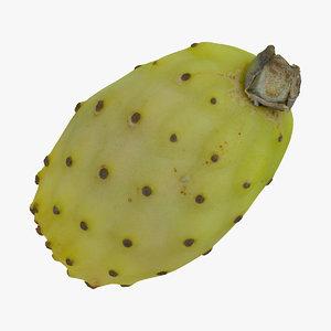 cactus fig 02 raw model