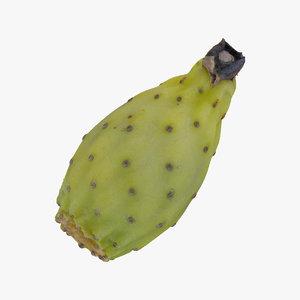cactus fig 03 raw 3D model
