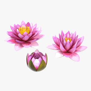 3D nymphaea siam purple set model