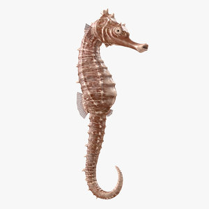3D spotted seahorse hippocampus kuda model