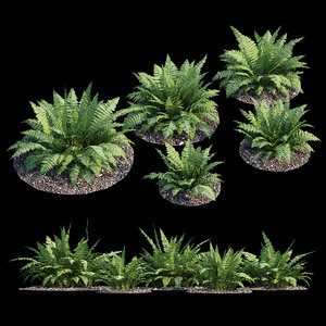 3D model fern plant bush