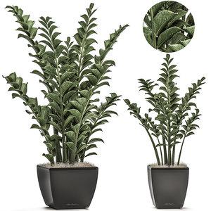 decorative pots interior zamioculcas model