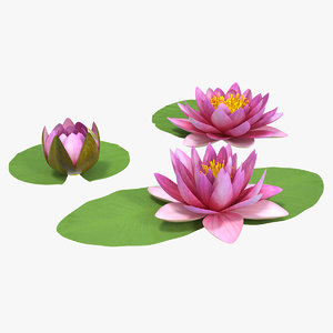 3D nymphaea siam purple set