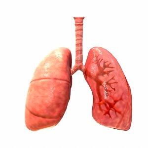 3D respiratory