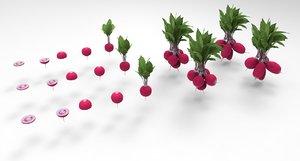 3D radish vegetable food model