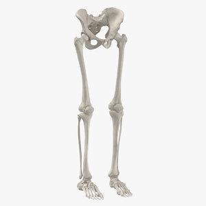 3D human legs pelvis bones anatomy
