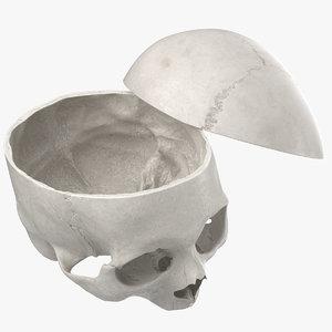 human skull cranial 02 3D model