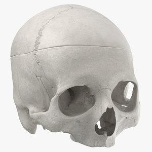 human skull cranial 02 3D