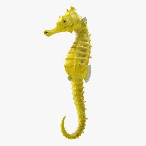 slender seahorse hippocampus reidi 3D model