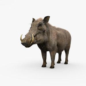 3D warthog hog