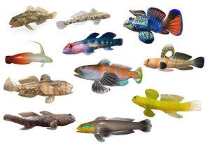 goby fish aquarium 3D model