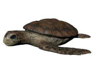 turtle animal reptile 3D model