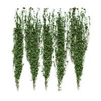 Plant ivy bindweed