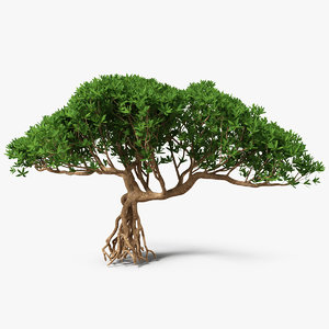 miniature bonsai tree 3D model