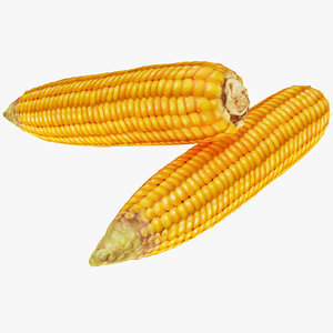 corn maize vegetable 3D model