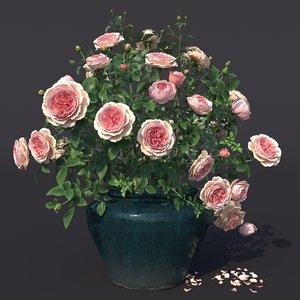 rose bush pot 1 3D