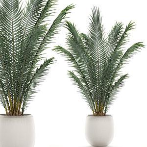 decorative palm interior white 3D model
