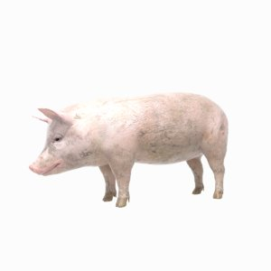 pig animations 3D